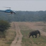 Elephant Herding using Helicopter