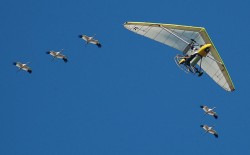 Ultra-Lite leads Whooping Cranes on Migration