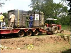 White Rhinos in crate in Uganda