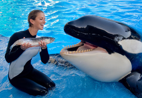 Sustainable Salmon Feeds Shamu at SeaWorld | The Disney Blog