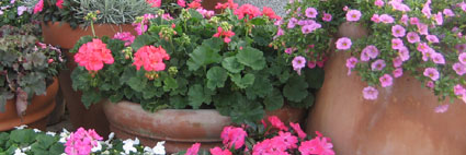 Italy Blooms - 2009 EPCOT Flower & Garden Festival