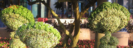 Hop Lo Topiary - 2009 EPCOT Flower & Garden Festival