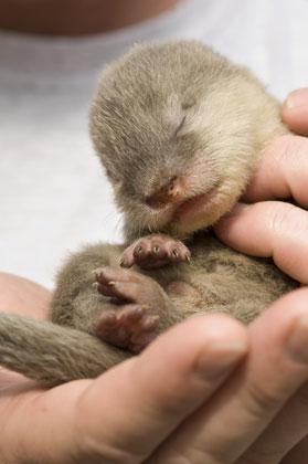 seaworld baby otters