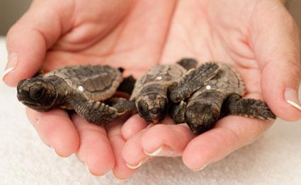 seaworld-orlando-turtle2