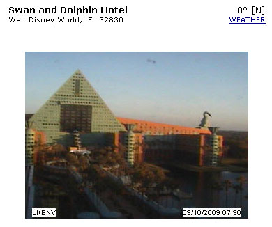 dolphin-webcam