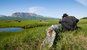 Cinematographer Warwick Sloss films brown bears grazing in Katmai National Park, Alaska