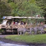 plains zebra at kilimanjaro safari