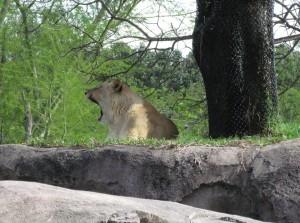 dak-safari-2