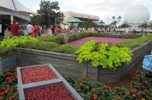 epcot-food-wine-cranberry-bog-2012