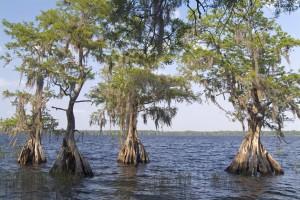 Perdido Rainwater Preserve