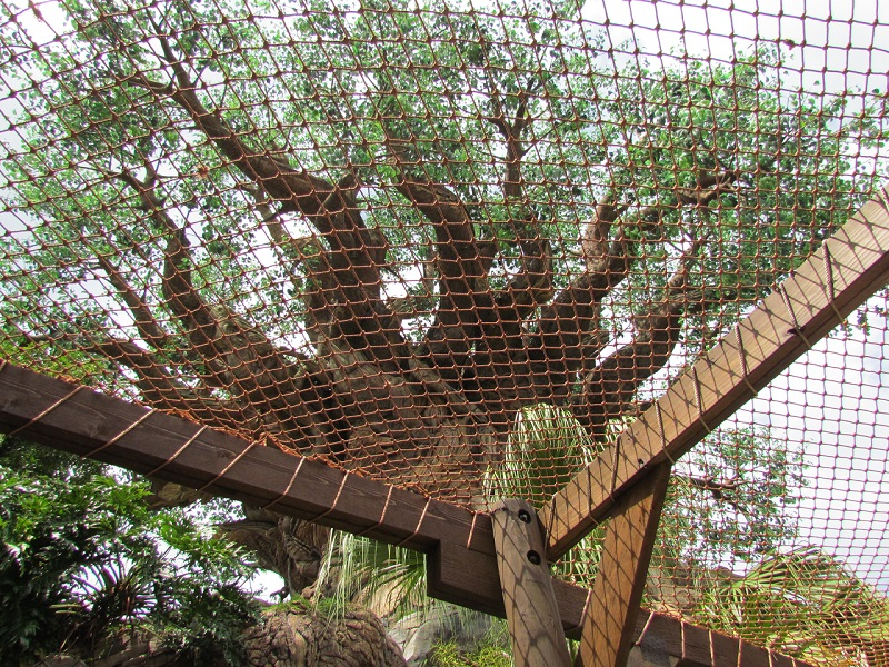 Sadly, the Tree Of Life hasn't made it to its 15th anniversary without some safety issues, resulting from dropping 'branches'
