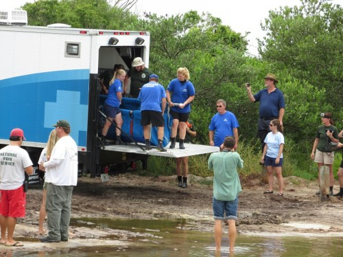 seaworld-manatee-rescue-1