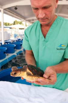 SeaWorld_Cares_Turtles_1