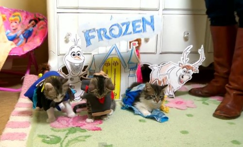 frozen-kittens