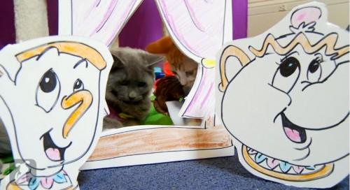 kittens-batb