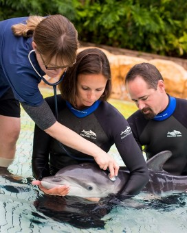 DiscoveryCove-Vet-Staff-Dolphin