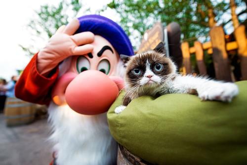 grumpy-cat-2