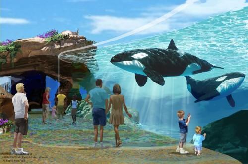 seaworld-sandiego-orca
