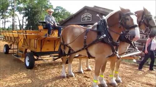 04-wdw-tri-circle-d-ranch-horse