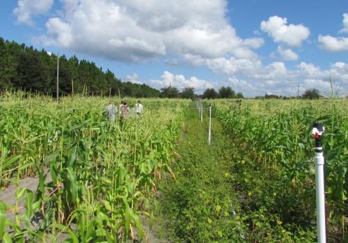 03-tinney-farms-maze