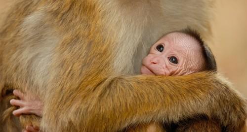 monkeykingdom-1