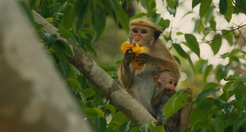 Disneynature's Monkey Kingdom..Maya and Kip..Ph: Film Frame..?Disneynature 2015