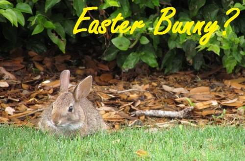 epcot-bunny3