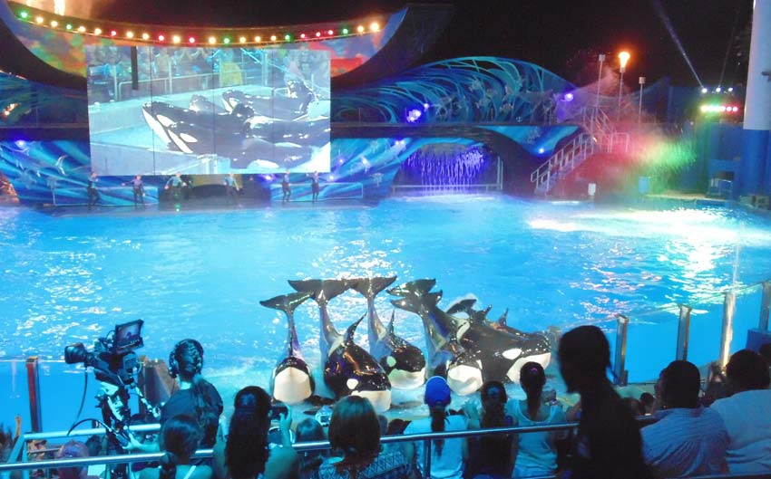 shamu-nights-seaworld