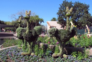 Ostriches from Fantasia