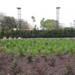 New planting behind stage