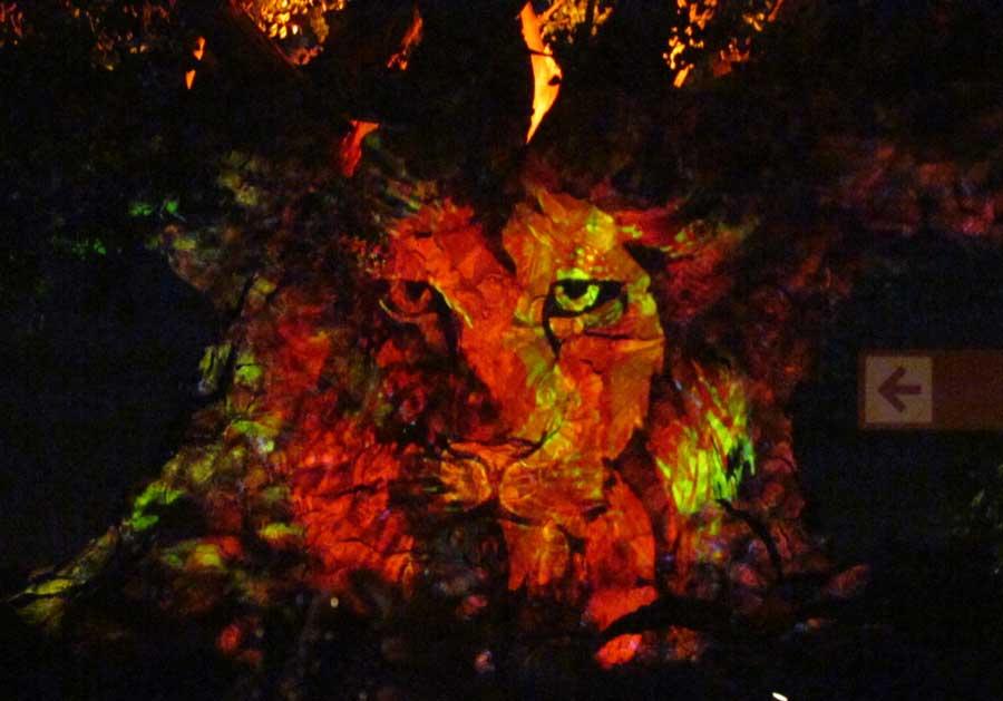 05-treeoflife-awakens-dak-lion-1