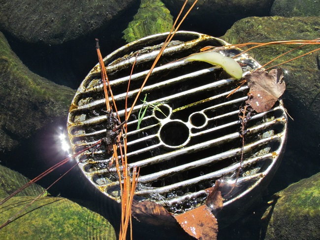koi-pond-japan-hidden-mickey