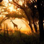 animal-kingdom-lodge-savannah
