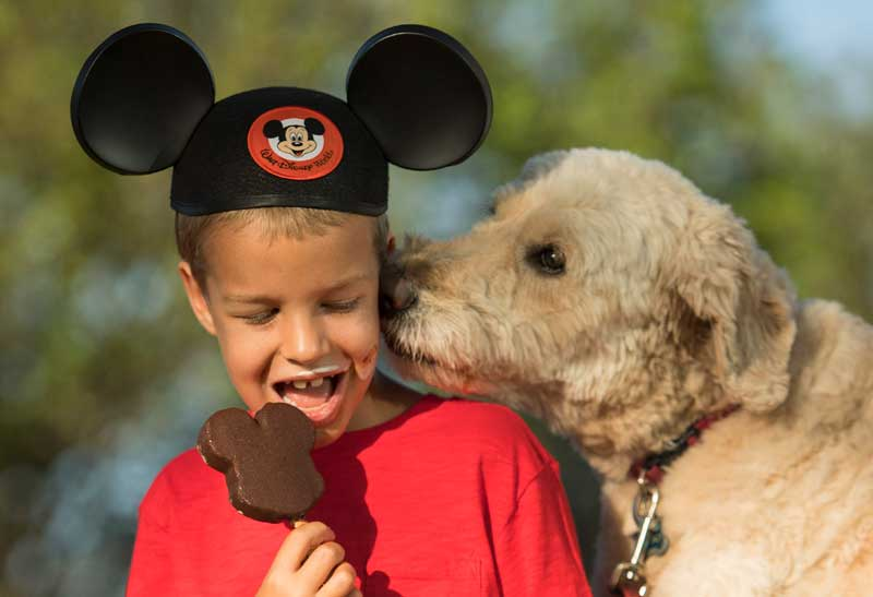 Disney world makes four hotels dog friendly the disney blog for Dog kennels near disney world