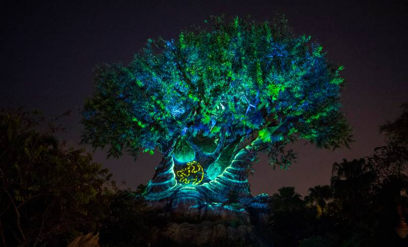 The Tree Of Life Adds More The Lion King To Its Nightly Awakenings The Disney Blog